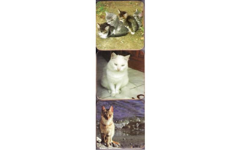 Σουβέρ - Ελληνικές γάτες