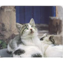 Mouse Pad: Ελληνική γάτα