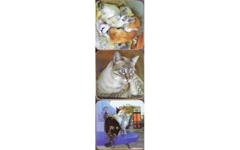 Σουβέρ - Ελληνικές γάτες 2